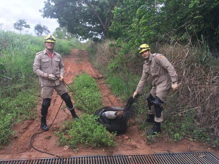 Bombeiros de Itaberaí resgatam tamanduá que caiu em poço
