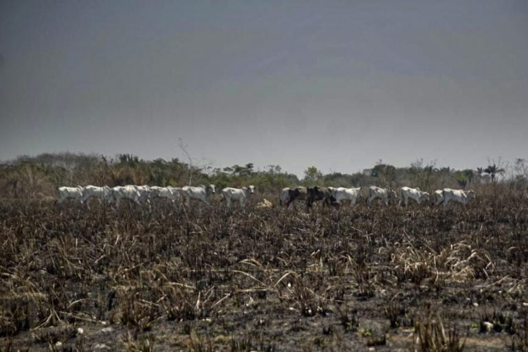 Homem é preso suspeito de desmatar grande área na Amazônia