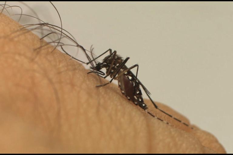 Em um ano dengue no país aumenta 600%